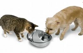 Pioneer - Trinkbrunnen - Rain Drop Style für Hunde und Katzen